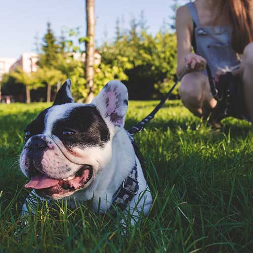 dog_friends_square