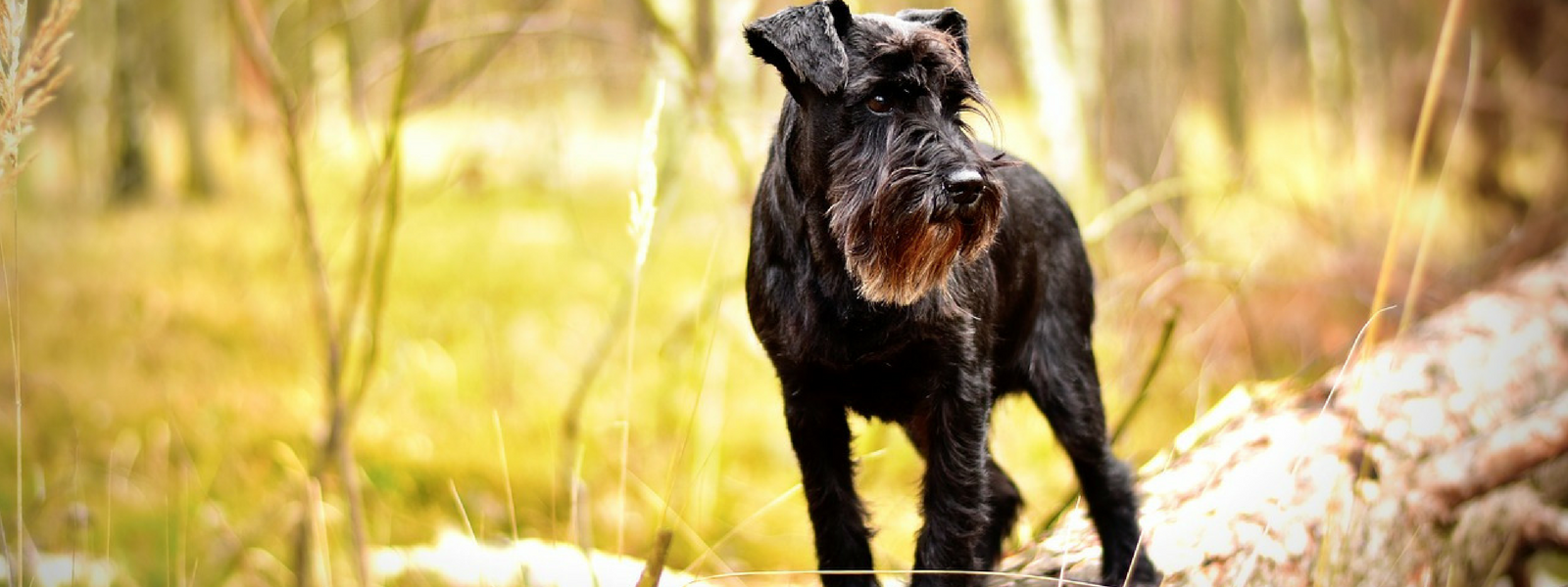 Top 20 Most Common Dog Names