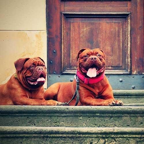 big_dogs_square