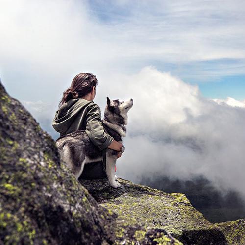 dog_mountain_square