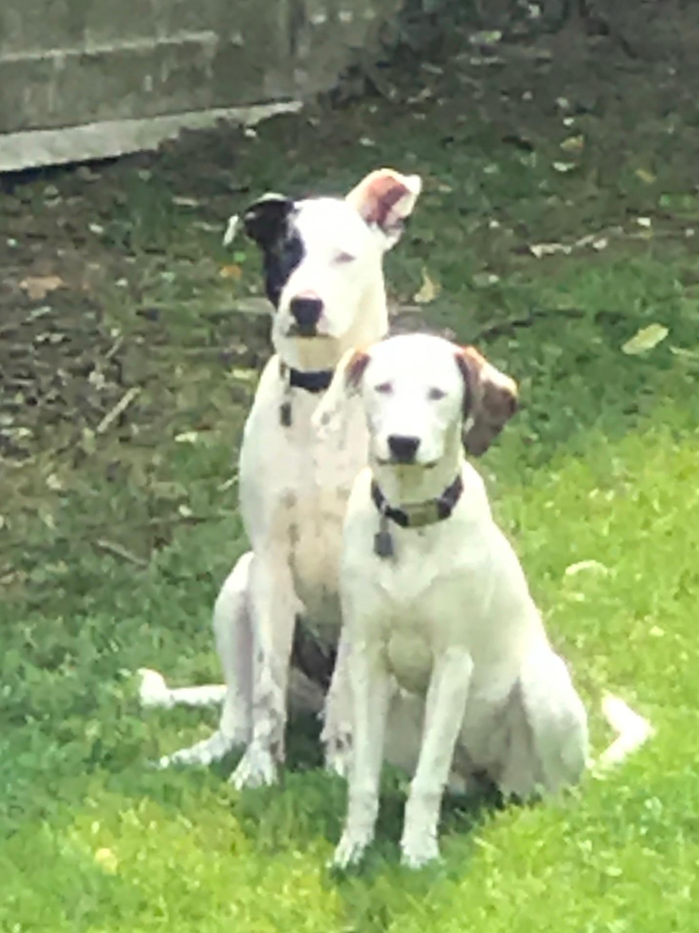 Jameson and Bailey 1