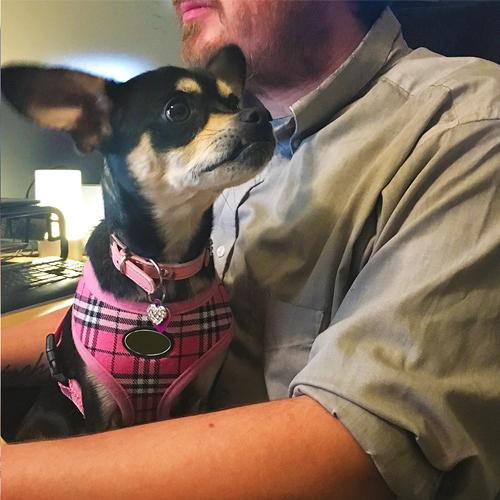 BLOG_2018-06-13_Office-Dog_Julie_no-titles 500x500
