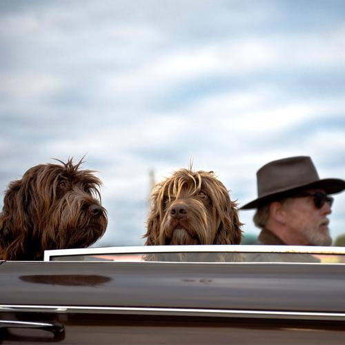 Seniors&Dogs_land-2564197_1920 500x500
