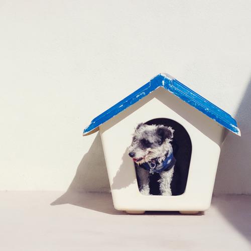 3_BLOG_dog-house_terrier 500x500