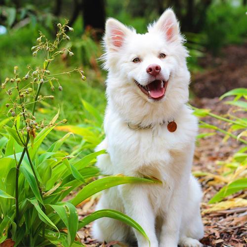 03_BLOG_dog-2088428_1920 500x500