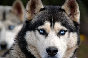 dog-1476155_1920