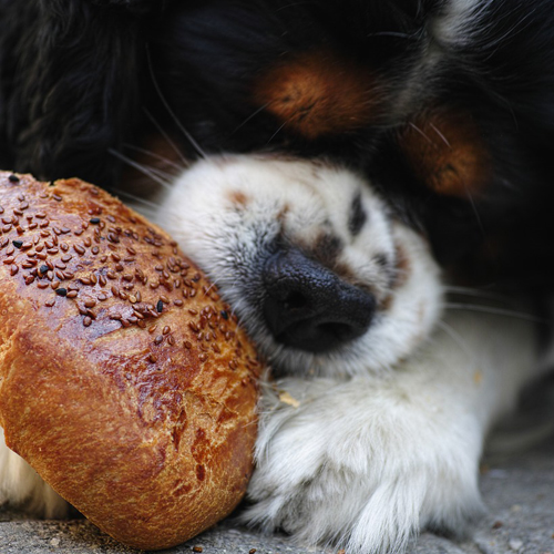 dog-bread 500x500