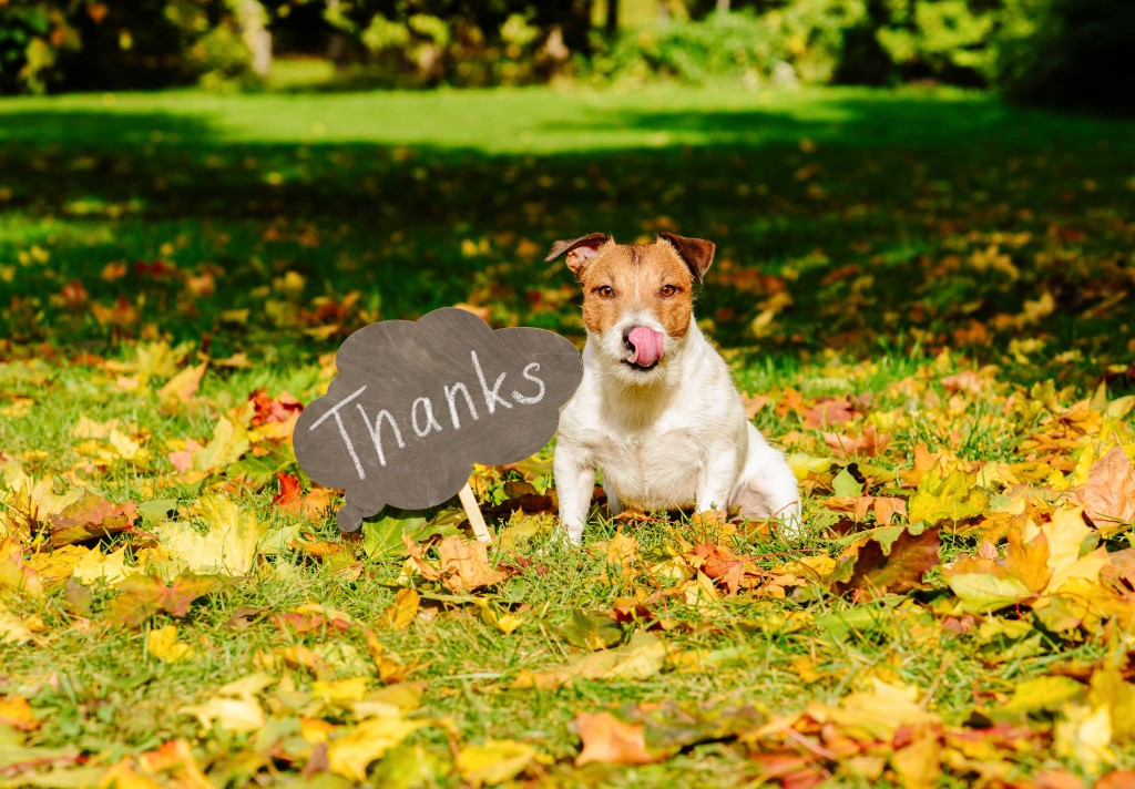 Thanks_Dog_shutterstock_750132334_Small