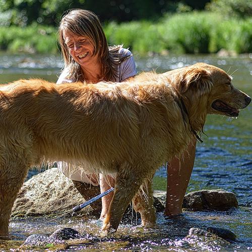 grooming_dog003 500x500