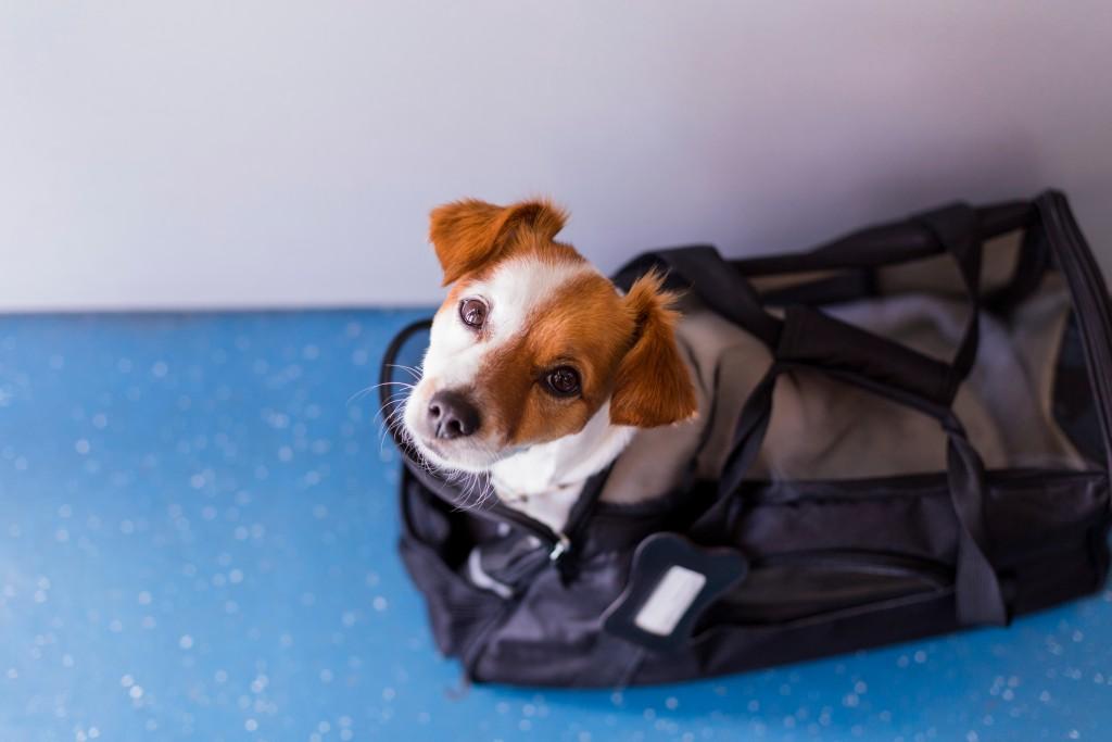 dog_carrier_shutterstock_1230083746