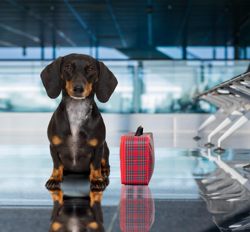 dog_suitcase_shutterstock_682517020