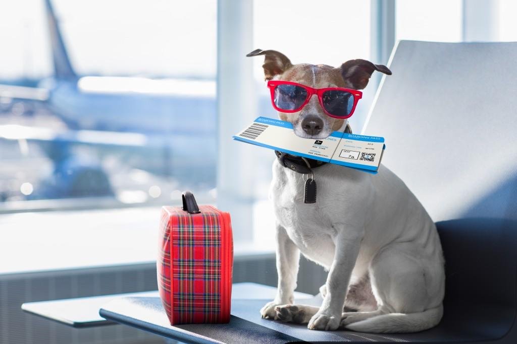 dog_flying_shutterstock_619468106