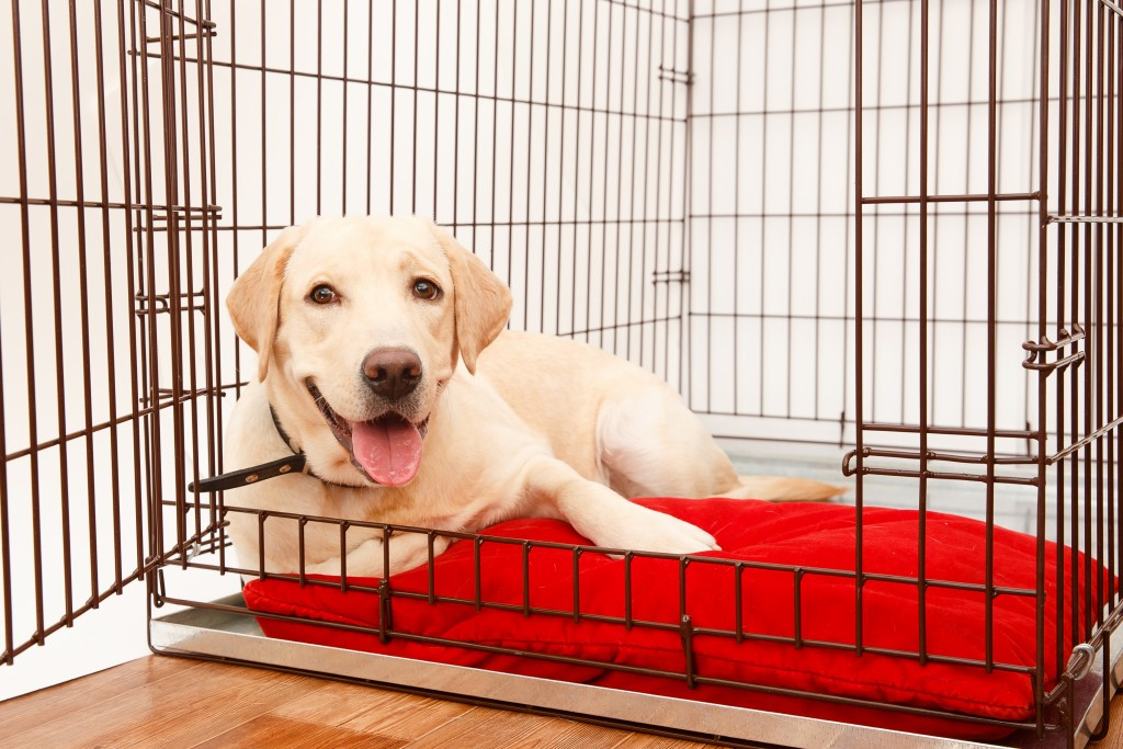 dog_Crate_shutterstock_745331356