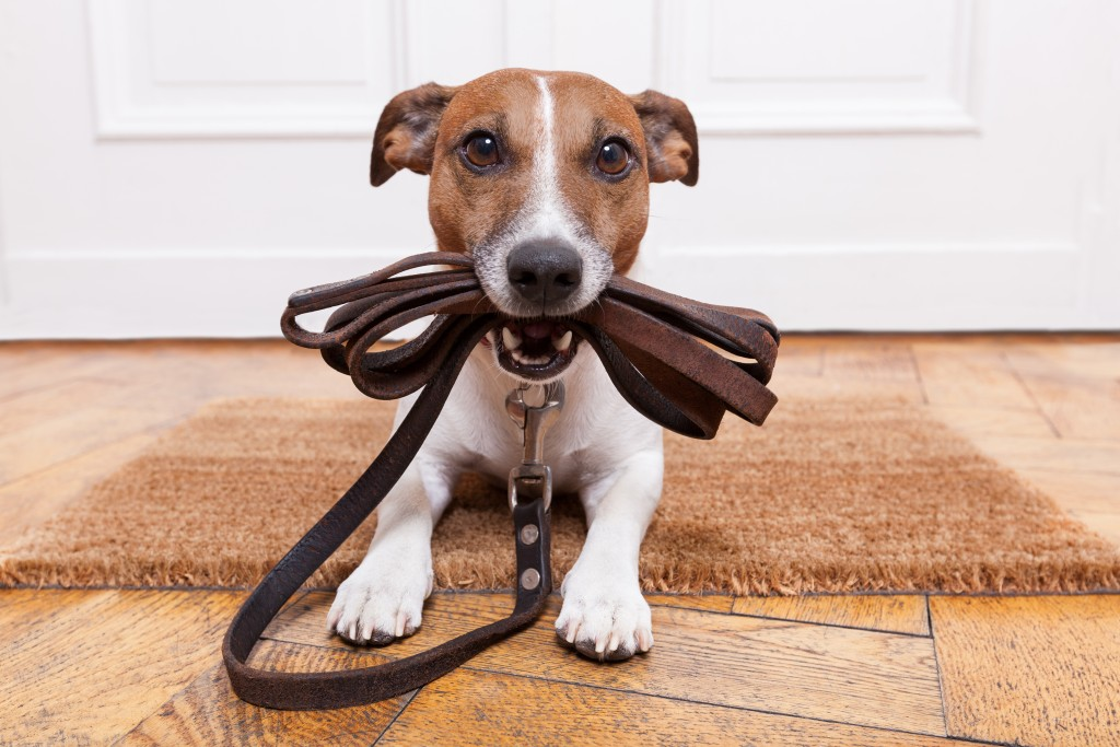 Dog_Leash_shutterstock_164733143